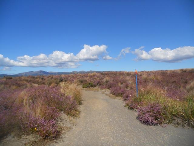 NZ north 254