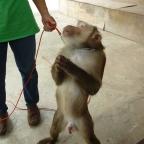 Monkey Boners in Mae Rim* and Songkran in Chiang Mai