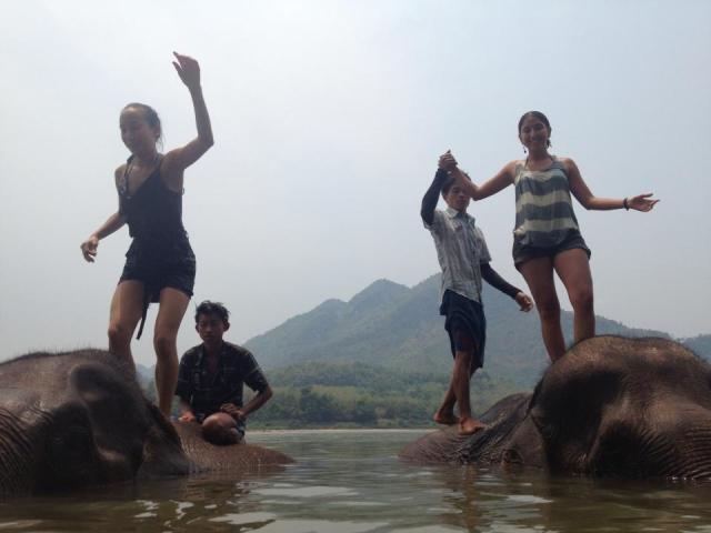 laosy elephants 2