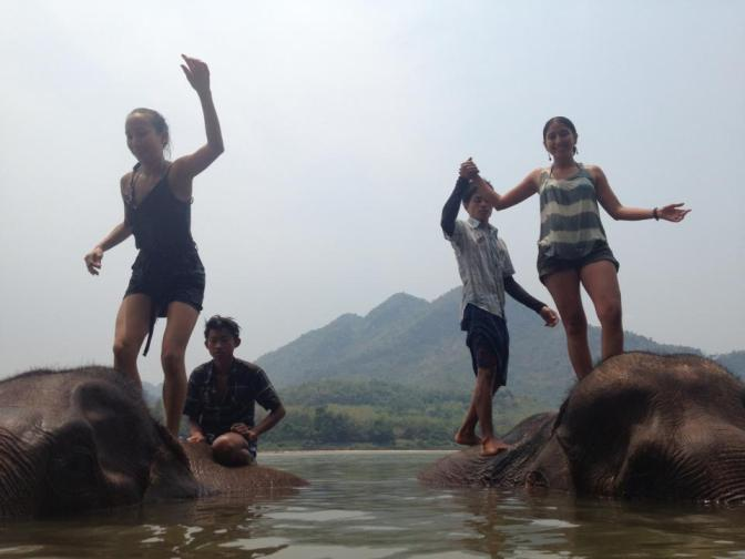 laosy elephants 2