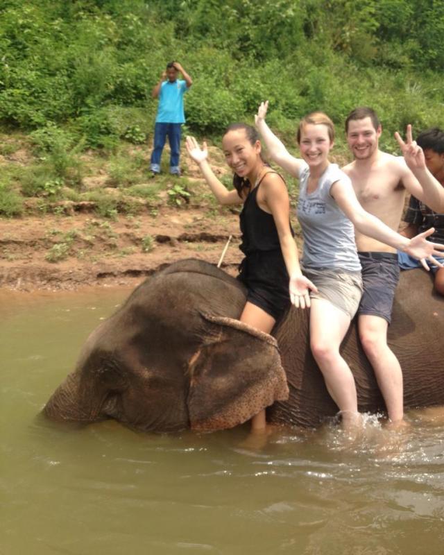 laosy elephants